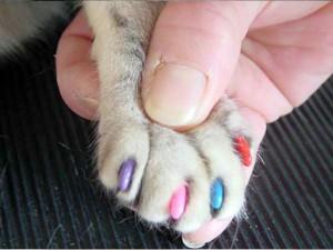 Маникюр собак и кошек
