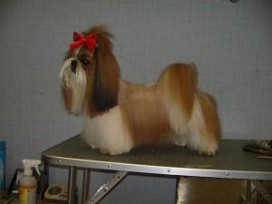 Тримминг собак2