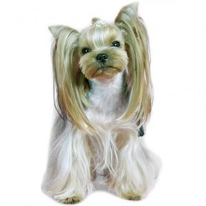 Услуги красоты для собак и кошек с выездом на дом