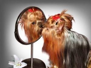 Услуги красоты для собак и кошек с выездом на дом3